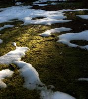 moss and snow by VorpalMalice