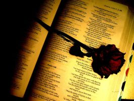 Dried rose on bible by goat-peach
