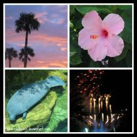 Florida Collage by caybeach