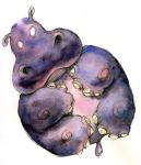 Advocate art, fat hippo by andycatling1