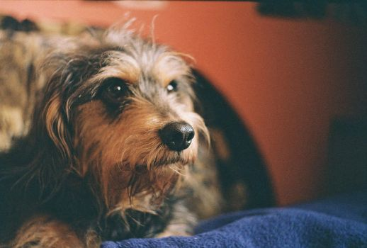 My Dog2 Zenit ET by coloradobeetle