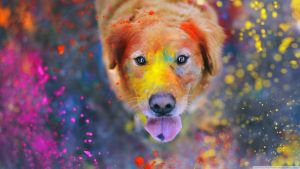 Wallpapers || Paint Dog BY: TFL by TutosFunnyLoveDA