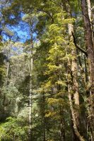 Ferntree Gully 6 by FallowpenStock