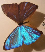 moths and butterflies stock136 by hatestock
