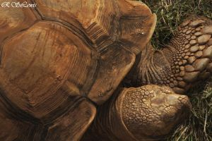 Tortise I by rslewisphotos