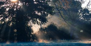 Sunlight In The Trees by StephiPhotography
