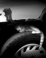 Car for Cat - What a Shelter by slreborn