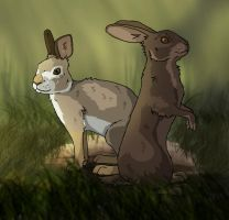 Two Bunnies by BecciES