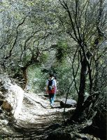 Cat-tail Canyon Trail by Juliet196