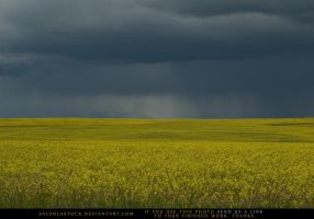 Canola Field 5 by SalsolaStock