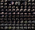 Different Angles of a Skull - Pairs and Poses by XeiArt
