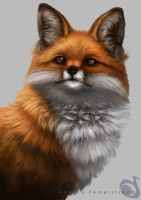 Fox study by Noukah
