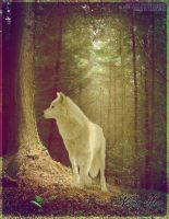 white wolf premade by renderedsublime