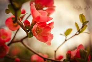 Printemps by Alessia-Izzo