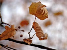 .leaves. by candymax