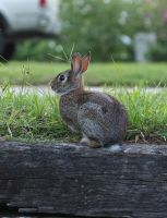 Bunny Stock by savung-stock