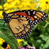 Jodie Foster Butterfly by MsgtBob