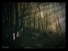 October Light by Weissglut