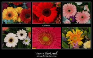 Gerbera collection by alilone