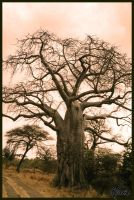 Baobab by tango-shoes