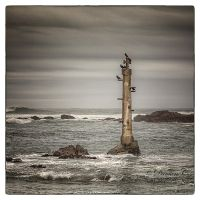 The Cormorants by damien-c-photography