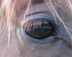 Horses Eye Reflection by concettasdesigns