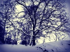 Winter tree by PurpleScarecrow