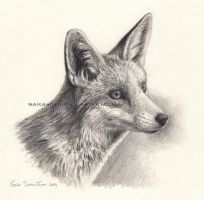 Fox by makangeni