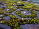 Steel and Moss by UnderTallTrees
