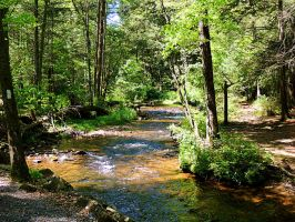 Creek Along The Appalacian Trail by TemariAtaje