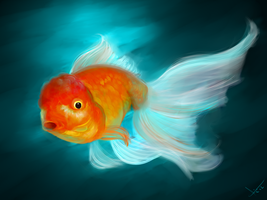Gold fish. by victter-le-fou
