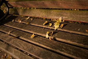 Autumnal Bench  G92 7109 by Partists