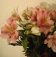 Flowers from my love. by Baitti