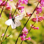 butterfly by Megson