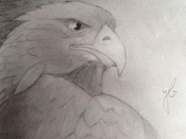 Eagle by ShadowWolf-15
