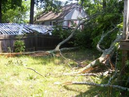 Downed Trees by Hannah2070