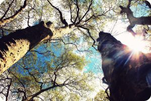 Looking Up by i-can-talk