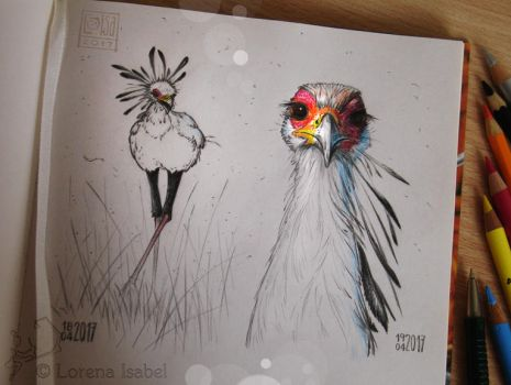 # 39 - Secretary bird - by Loisa