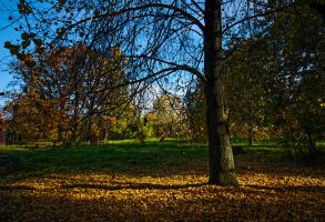 The colors of Fall... _26_ by my-shots