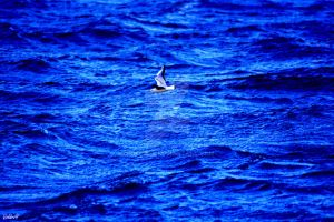 Gull on Sea by VoldroY