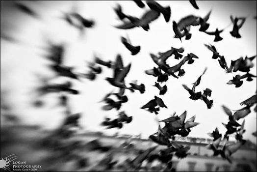 LensBaby: Liberty - Pigeons by LoganX78