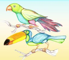 Parrot and Toucan by QuintinRWhite