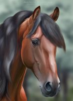 Andalusian Horse by Stasushka