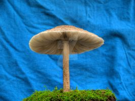 More HDR Mushrooms 2 by Dracoart-Stock