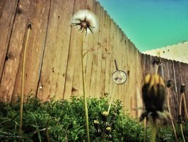 Backyard iNVASION Series#1 by Keith0186