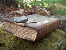 Book in Woods 2 by DaemStock
