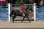Horse Show Stock 004 by Notorious-Stock