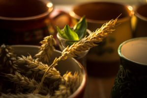 Harvest by TShingen