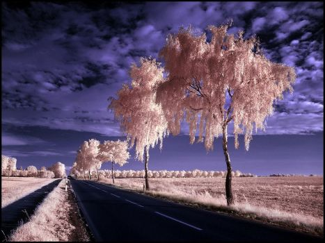 Country Road II infrared... by MichiLauke