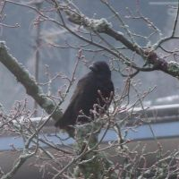 crow 4 by sacral-stock